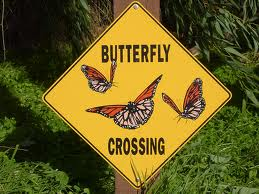 Flutter Your Worries Away at The Butterfly House