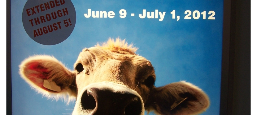 Farm Fest at Imagination Station (Exhibit extended through August 5th)