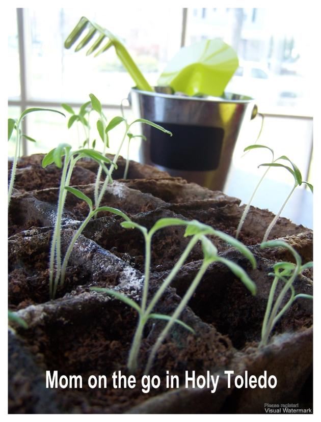 opengym_plants 034