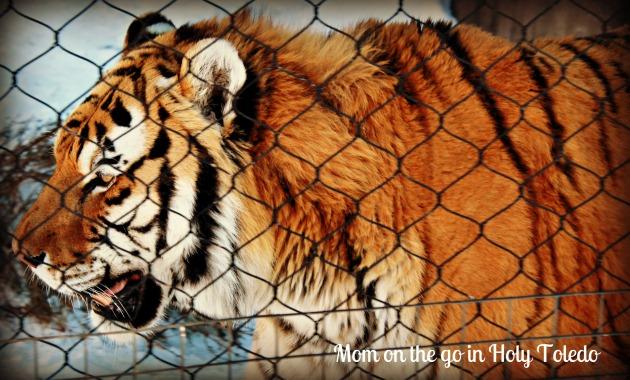 zoo 185