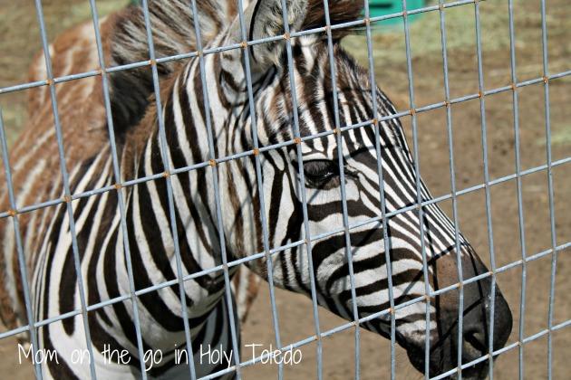 petting zoo 057