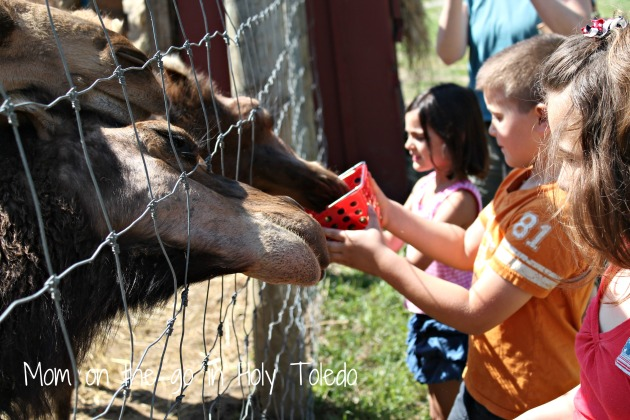 petting zoo 067