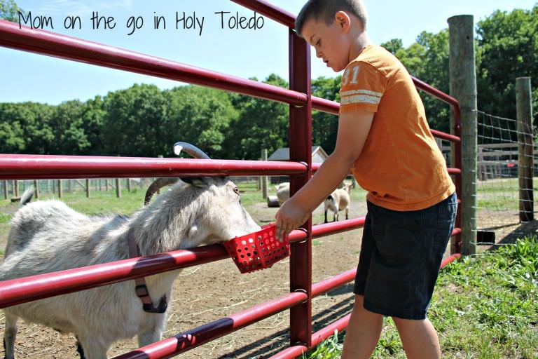 petting zoo 073