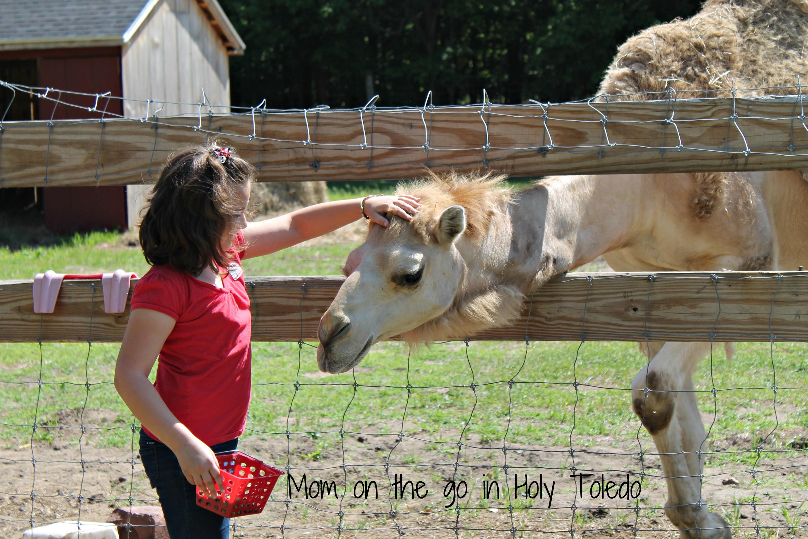 petting zoo 083