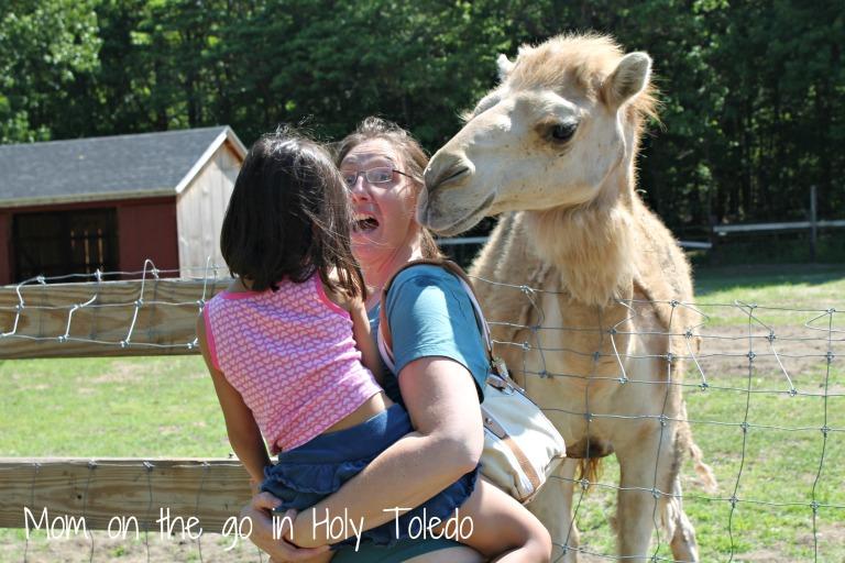 petting zoo 109pt