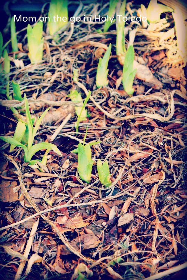 burrito_spring 019