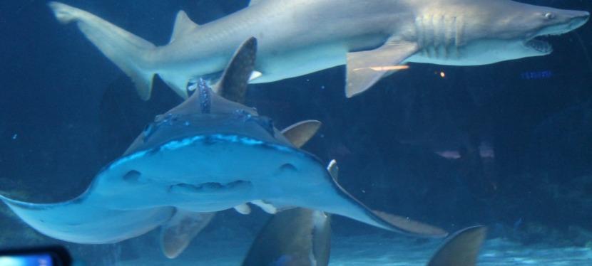 Petting Sharks inKentucky!?!