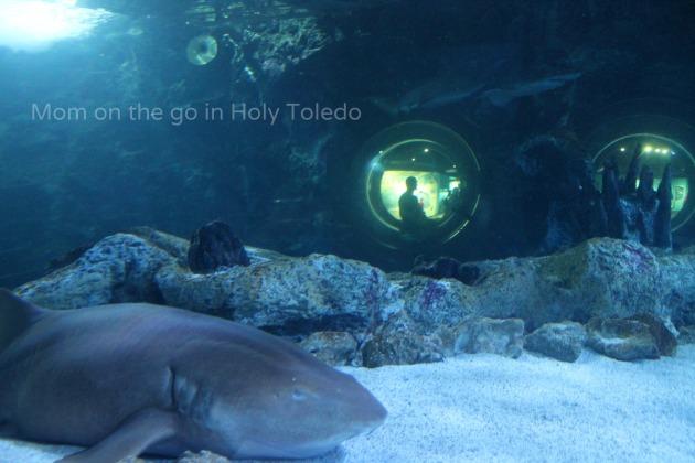 castle_aquariumnewport 169