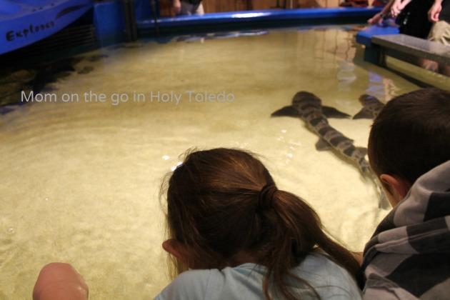 castle_aquariumnewport 187