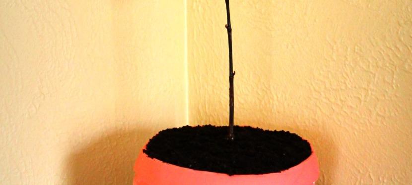 Flowerpot & dirt orCake?