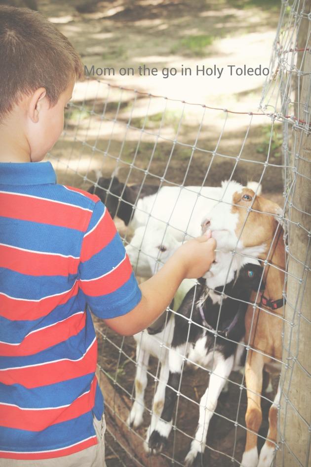 indian zoo 053BLOG