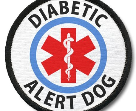 We NEED Your Help: Help Addysen Get a Diabetic Dog