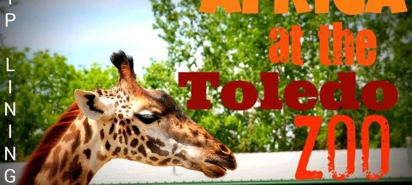 Ziplining & Feeding Giraffes inToledo