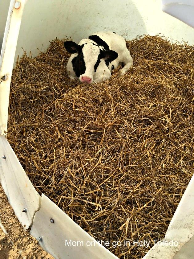 FarmNight16_picnik