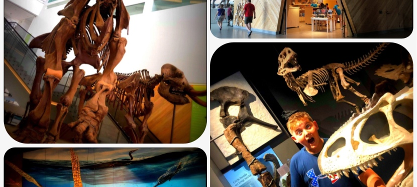 University of Michigan's Museum of NaturalHistory