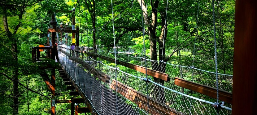 Holden Arboretum Forests &Gardens