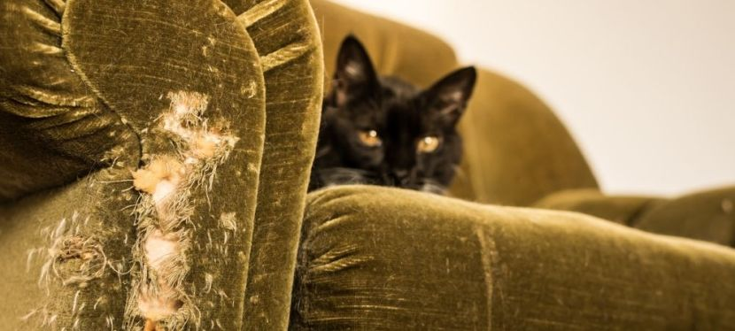 Most Common Reasons Why Furniture DamageHappens