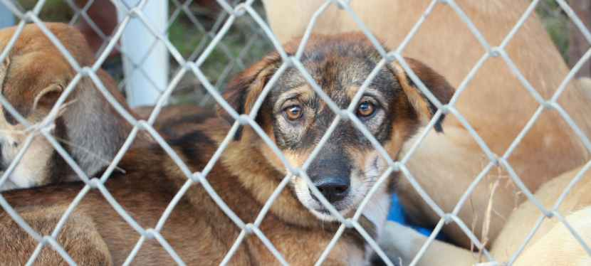 Top Considerations for Getting a ShelterDog