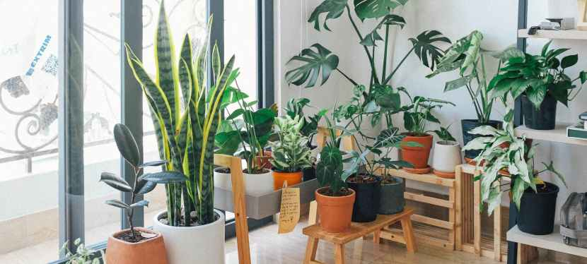 Best Houseplants for Beginners and How to Care ForThem