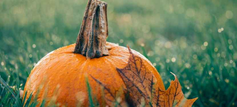 Fun Things to do this Fall in Toledo: Fall Guide2021
